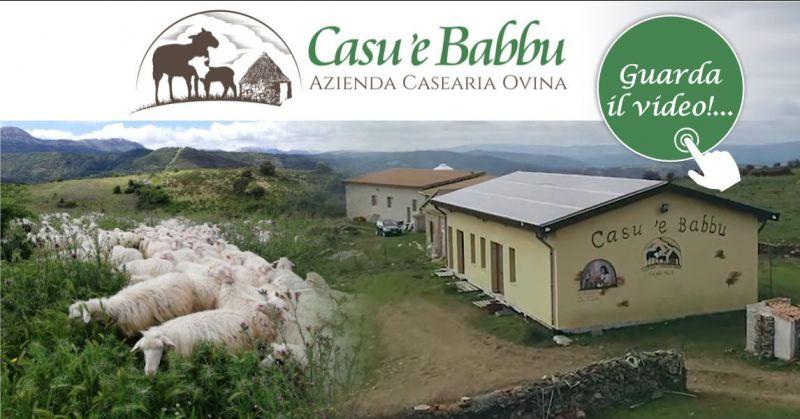 Azienda ovino casearia CASU E BABBU - offerta formaggio pecorino tradizionale latte crudo di pecora