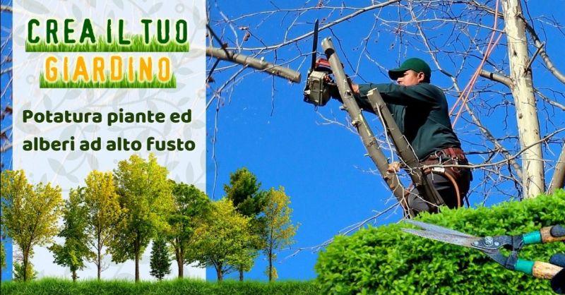 Promozione potatura alberi ad alto fusto Modena - Occasione giardiniere specializzato potatura piante Modena