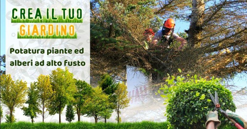 Offerta servizio potatura alberi ad alto fusto Bologna - Occasione trova giardiniere esperto in potatura Bologna
