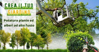 occasione potatura alberi alto fusto modena offerta giardiniere esperto in potatura piante modena