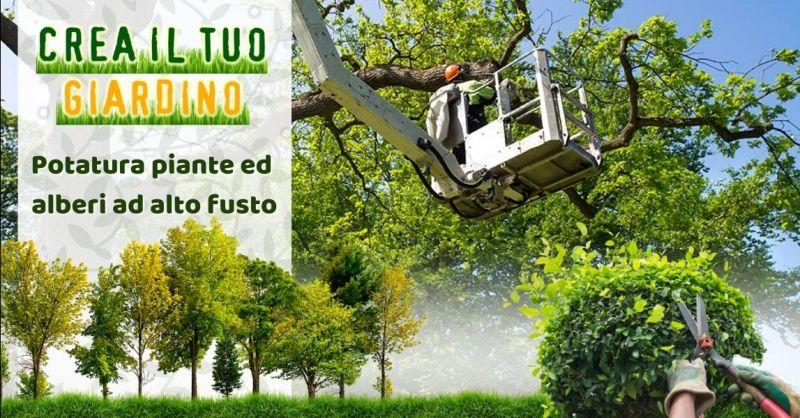 Occasione potatura alberi alto fusto Modena - Offerta giardiniere esperto in potatura piante Modena