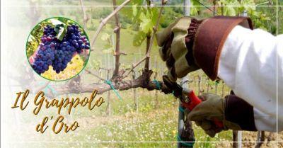 offerta servizio di potatura viti il grappolo doro vicenza