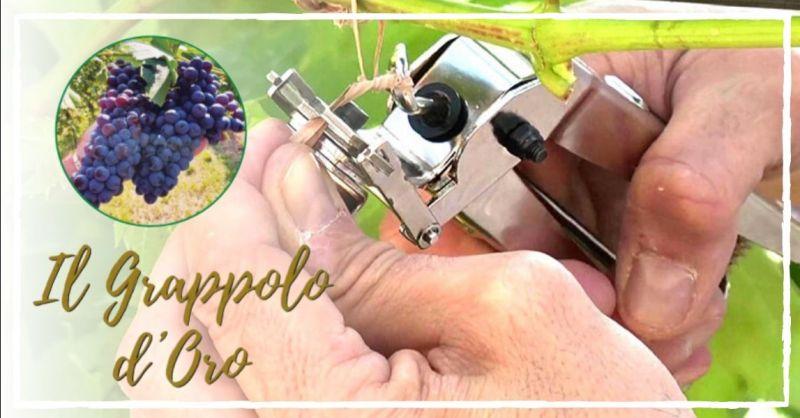 Promozione servizio di legatura dei tralci nelle viti il grappolo d'oro Vicenza