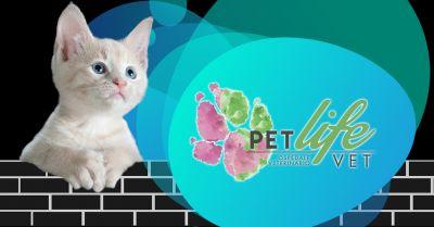 offerta clinica veterinaria con pronto soccorso milano occasione pronto soccorso veterinario