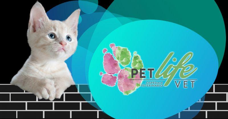 Offerta clinica veterinaria con pronto soccorso Milano - Occasione Pronto soccorso Veterinario