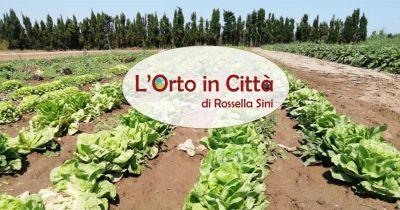l orto in citt di rossella sini offerta vendita frutta e verdura produzione propria km zero