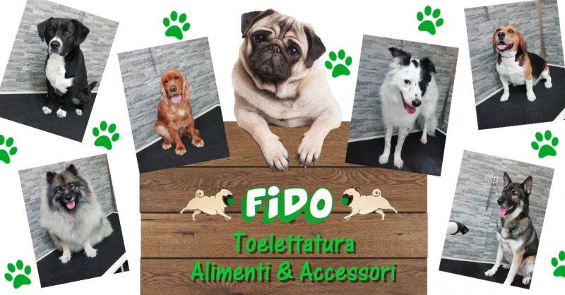 Offerta Toelettatura Cani Animali Domestici Osimo - Occasione Accessori per Animali Domestici Osimo