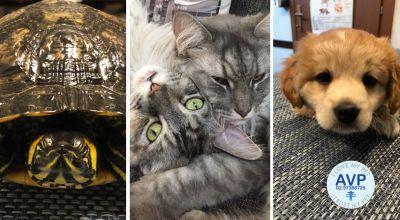 offerta ambulatorio veterinario per animali da compagnia caronno pertusella varese promozione veterinario per animali esotici caronno pertusella varese