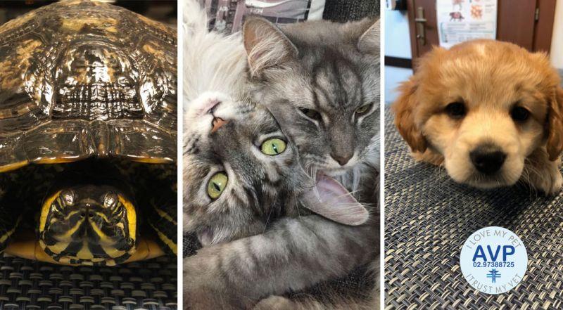 Offerta ambulatorio veterinario per animali da compagnia Caronno Pertusella Varese - Promozione veterinario per animali esotici Caronno Pertusella Varese
