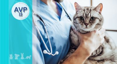 ambulatorio veterinario pertusella offerta chirurgia oncologica su animali domestici non convenzionali promozione chirurgia dei tessuti molli su animali d affezione