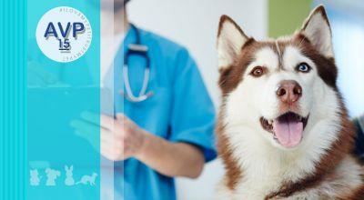 ambulatorio veterinario pertusella offerta ambulatorio veterinario analisi cliniche promozione analisi cliniche per animali d affezione