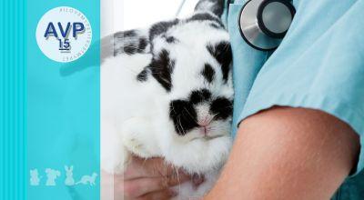 offerta interventi di chirurgia generale animali da compagnia promozione chirurgia generale animali esotici