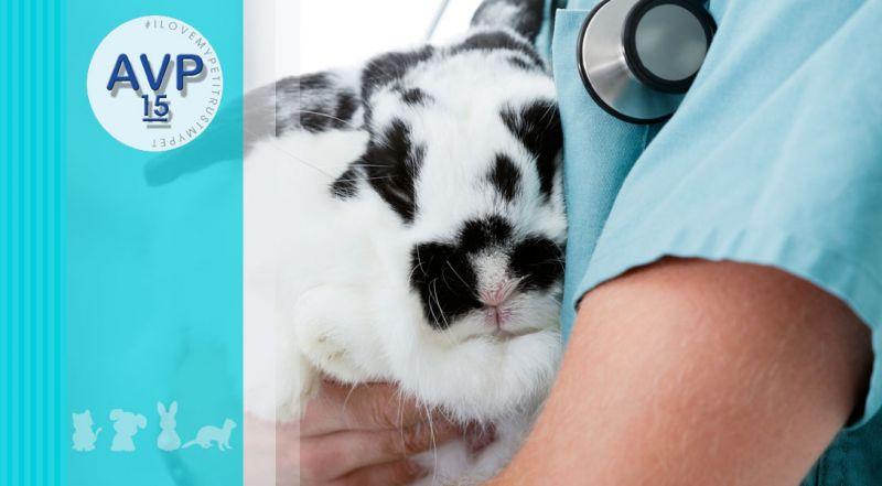 Offerta interventi di chirurgia generale animali da compagnia – promozione chirurgia generale animali esotici