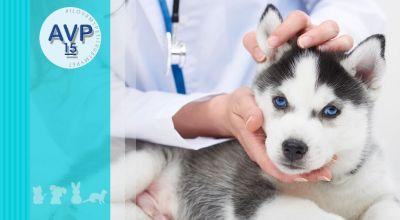 offerta medicina veterinaria preventiva promozione medicina preventiva per animali