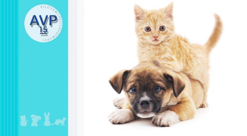 Offerta piano di salute cani e gatto – promozione programma di prevenzione per animali