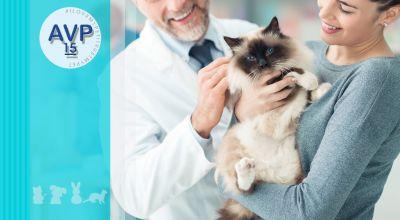 offerta veterinario visite mediche specialistiche promozione visite mediche specialistiche su cani