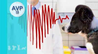 offerta veterinario elettrocardiogramma ecg promozione cardiologica veterinaria elettrocardiogramma varese