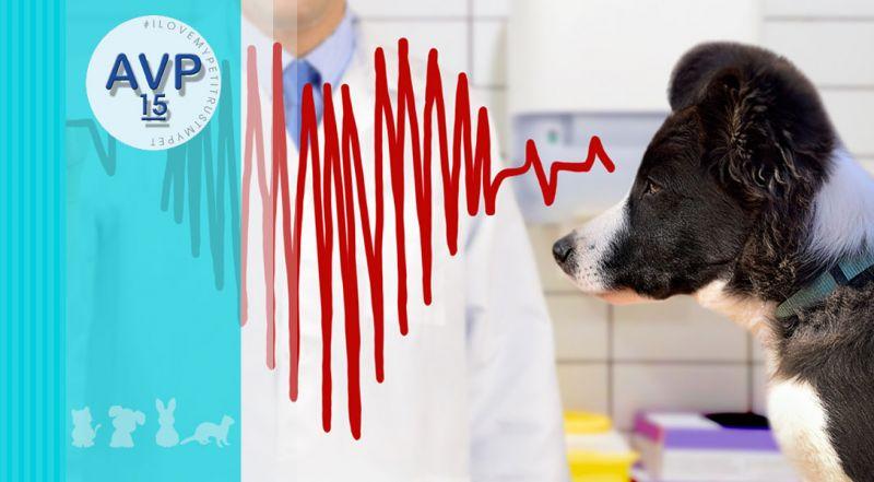 Offerta veterinario elettrocardiogramma ecg – promozione cardiologica veterinaria elettrocardiogramma varese