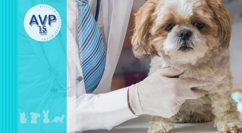 Offerta visita specialistica gastroenterologica veterinaria – promozione disturbi gastroenterici negli animali varese