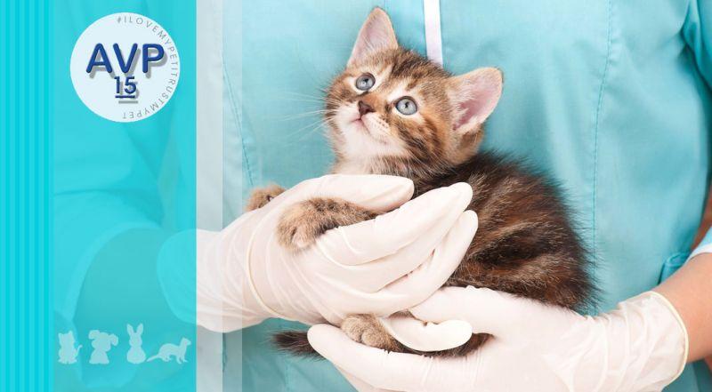 Ambulatorio Veterinario Pertusella - Offerta visita pre-anestetica animali domestici – promozione anestesia su animali domestici e non convenzionali varese