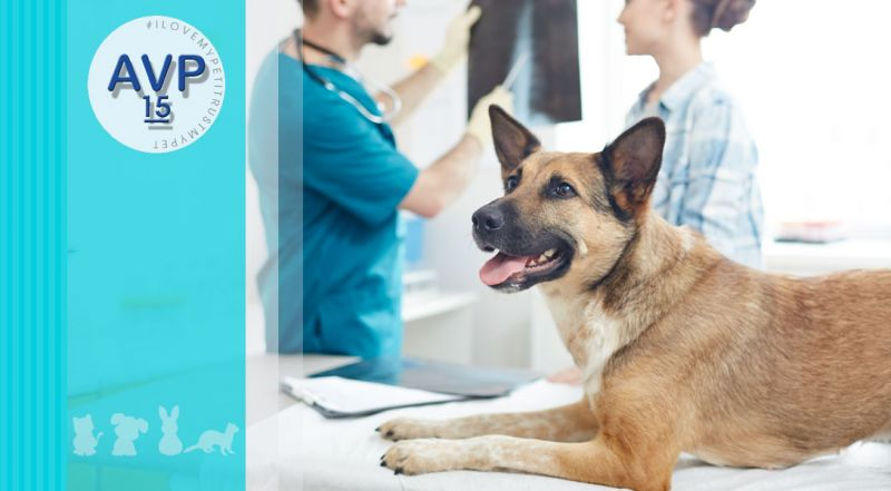 Offerta esami radiologici su animali – promozione esami radiologici su animali non convenzionali varese