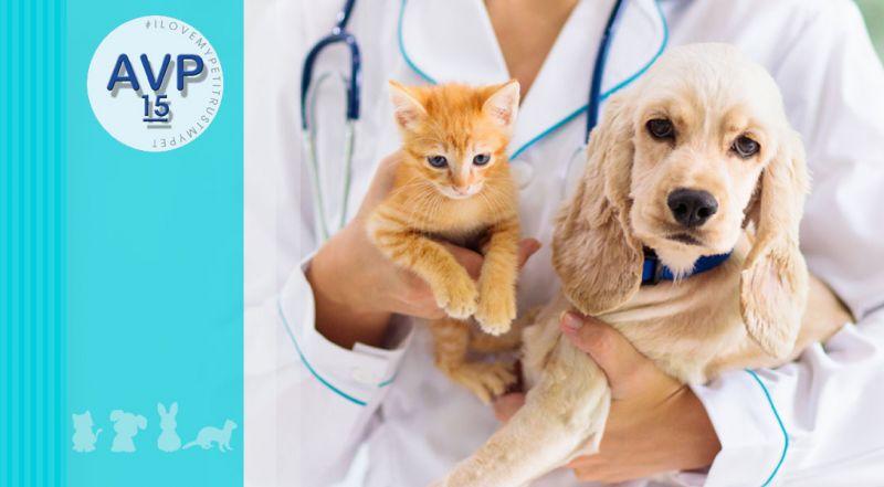 Ambulatorio Veterinario Pertusella  - Offerta veterinario esame di endoscopia – promozione patologie gastrointestinale negli animali varese