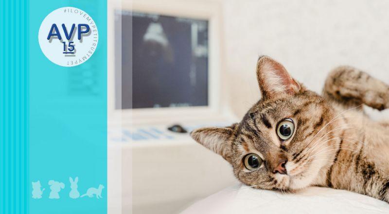 Ambulatorio Veterinario Pertusella  - Offerta ecografie fast animali d'affezione – promozione ecografie emorragie interne cane varese