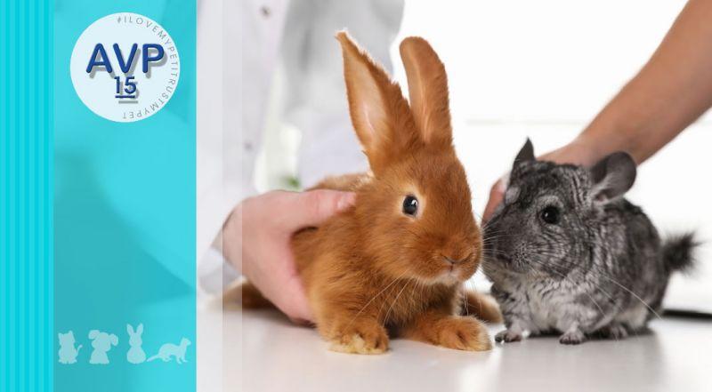Ambulatorio Veterinario Pertusella  - offerta visite cliniche animali da compagnia – promozione visite animali da compagnia non convenzionali varese