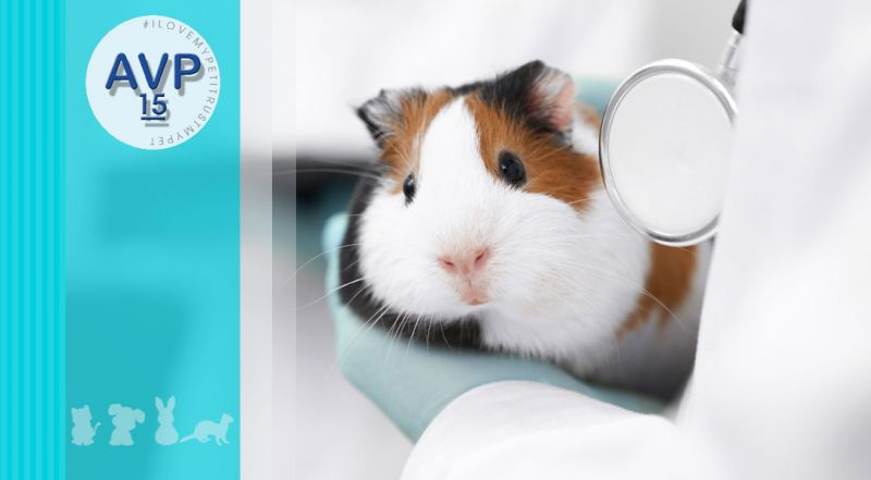 Ambulatorio Veterinario Pertusella  - offerta veterinario visita dermatologica – promozione animali alterazioni cutanee su cute varese