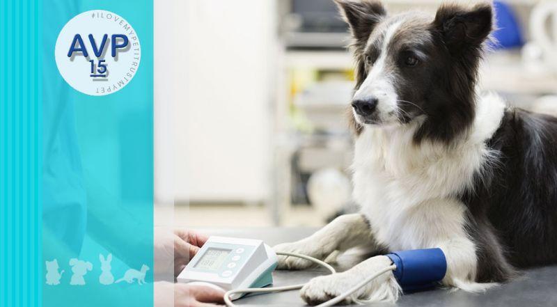Ambulatorio Veterinario Pertusella - Offerta misurazione pressione arteriosa negli animali – promozione ipertensione arteriosa negli animali varese