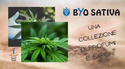 offerta inflorescenza legale di cannabis a treviso occasione vendita on line di canapa legale a treviso