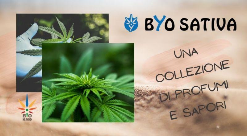 Offerta inflorescenza legale di cannabis a Treviso – Occasione vendita on line di canapa legale a Treviso