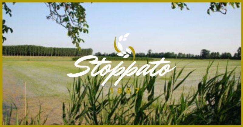 Stoppato 1887 - Offerta vendita online prodotti biologici produzione riso e chips made in Italy