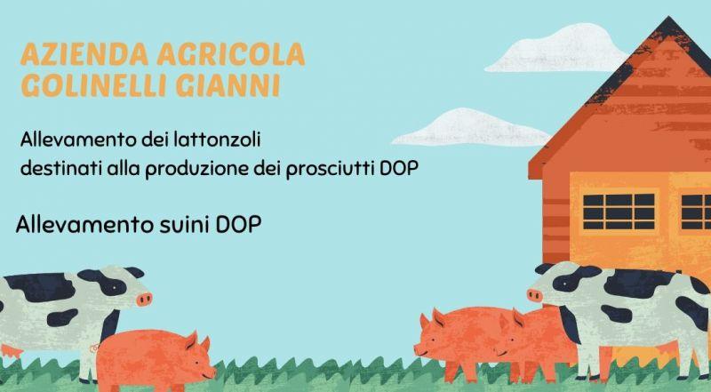 Vendita allevamento di lattonzoli per la produzione di prosciutti DOP a Modena – Occasione allevamento suini italiani a Modena