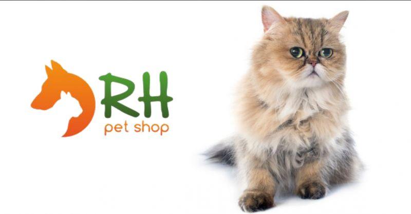 razze di gatti: il gatto persiano