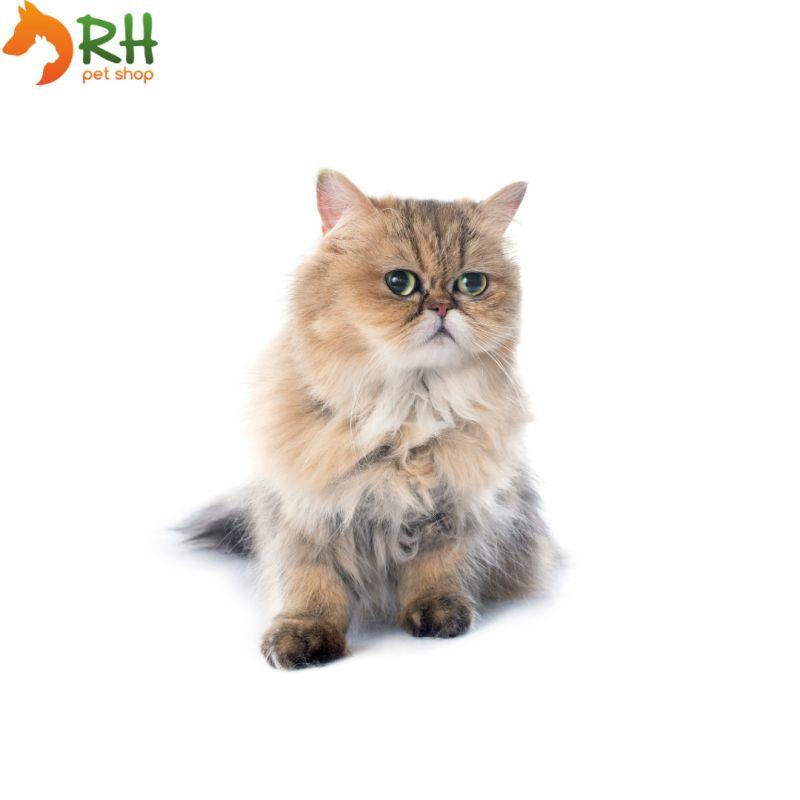 RHPETSHOP - vendita online prodotti per gatti scontati