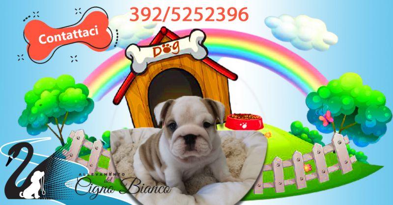 Offerta Trova la migliore pensione per cani a Brescia - Occasione pensione di lusso per cani Brescia
