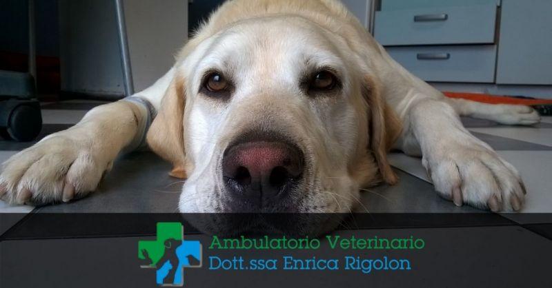 AMBULATORIO VETERINARIO RIGOLON - Servizio veterinario a Brendola VI Dott.ssa Enrica Rigolon