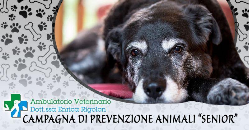 Offerta Visita Specialistica per Animali Senior Vicenza - Occasione Campagna di prevenzione Animali Senior