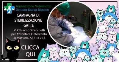 offerta campagna di sterilizzazione gatti vicenza occasione gatti servizio di castrazione vicenza