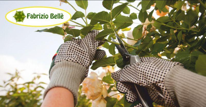 belle fabrizio offerta servizio potatura alberi ad alto fusto massa - occasione servizi di giardinaggio carrara