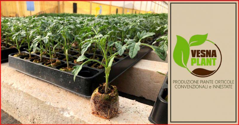 VESNA PLANT Offerta produzione piantine da orto ragusa - occasione ortovivaista ragusa