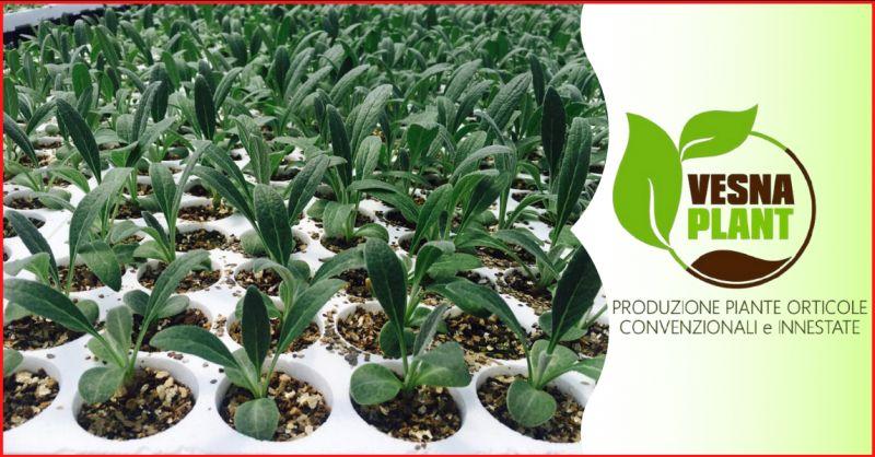 VESNA PLANT Offerta vivaio piante da orto ragusa - occasione vendita piante da orto ragusa