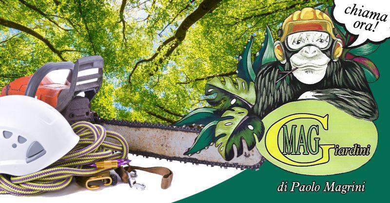 Offerta Potatura Abbattimento Alberi Ad Alto Fusto Numana - Occasione Tree Climbing Numana