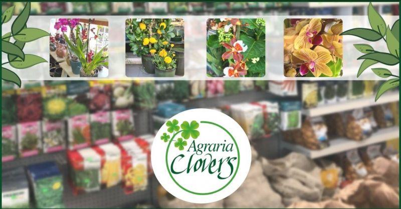 offerta articoli e attrezzature per il verde - promozioni vendita piante e fiori Lucca
