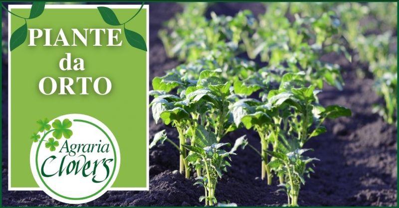 promozione vendita piante e sementi da orto Lucca - AGRARIA CLOVERS