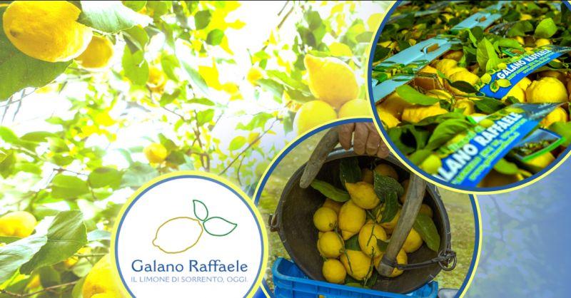 Offerta vendita limoni di Sorrento all ingrosso - occasione esportazione limoni di Sorrento IGP