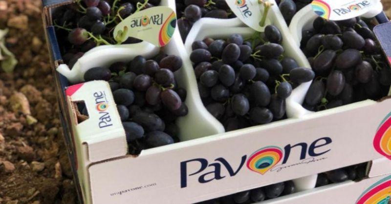 Azienda agricola PAVONE - Offerta migliore azienda Italiana produzione uve da tavola alta qualità
