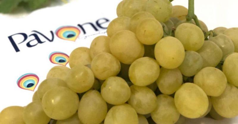 AZIENDA AGRICOLA PAVONE - Produktion und Verkauf von hochwertigen Tafeltrauben made in Italy