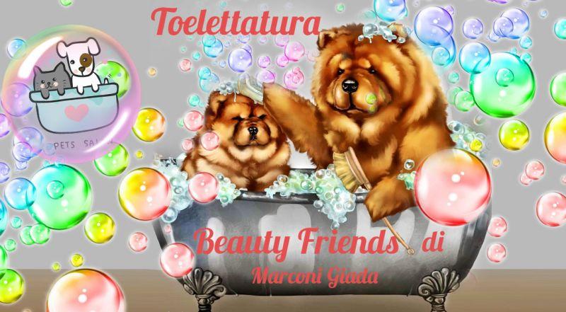 Offerta toelettatura e tosatura cani ancona - promozione bagni curativi e antiparassitari ancona